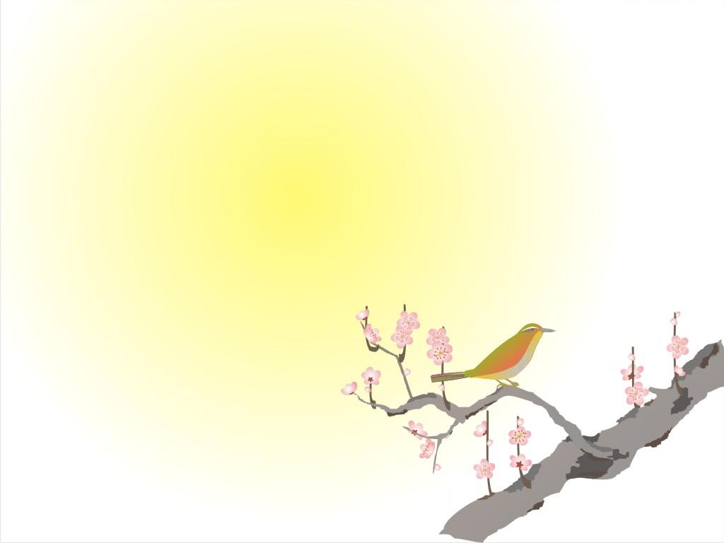 marketing-slides-beauty-bird-backgrounds-wallpapers