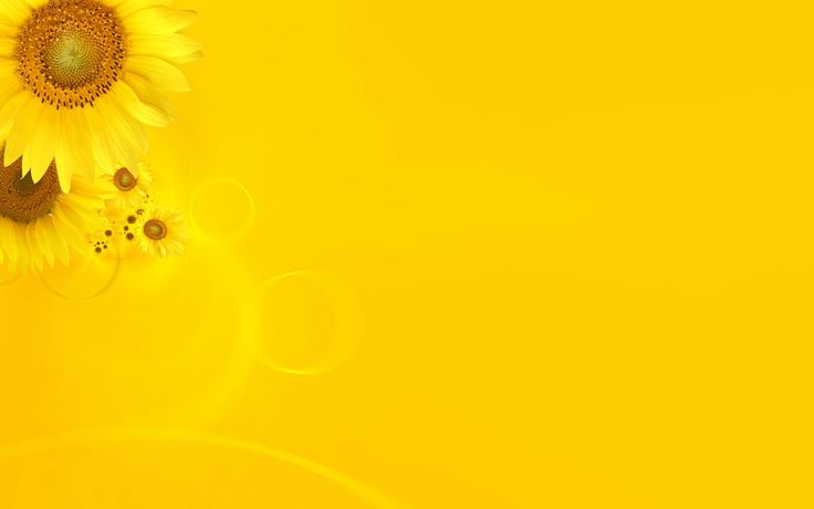 sunflowers-ppt-Yellow -PPT for Powerpoint Templates